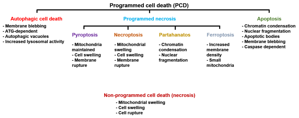 Cell death pathways